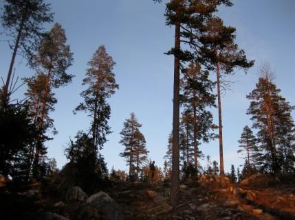 Hultskogen